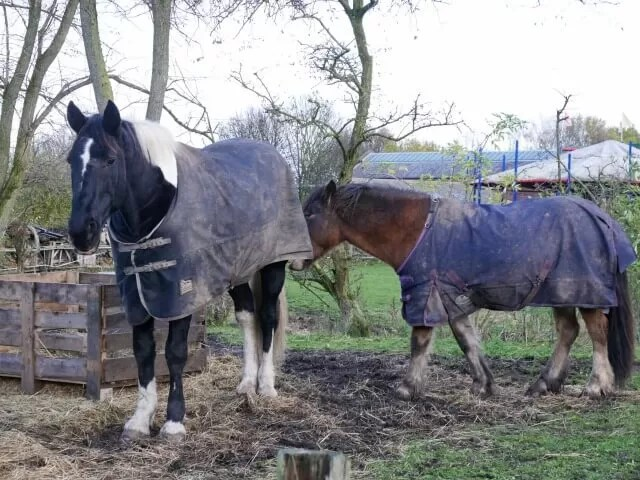 horses at Black Country living museum