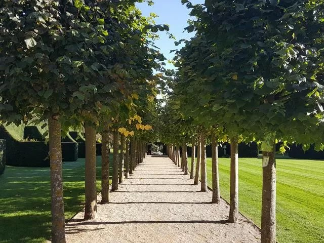 line of trees at coughton court