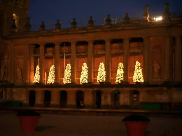 Blenheim christmas trees