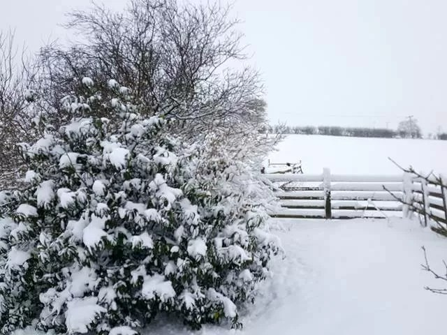 snow past the trees