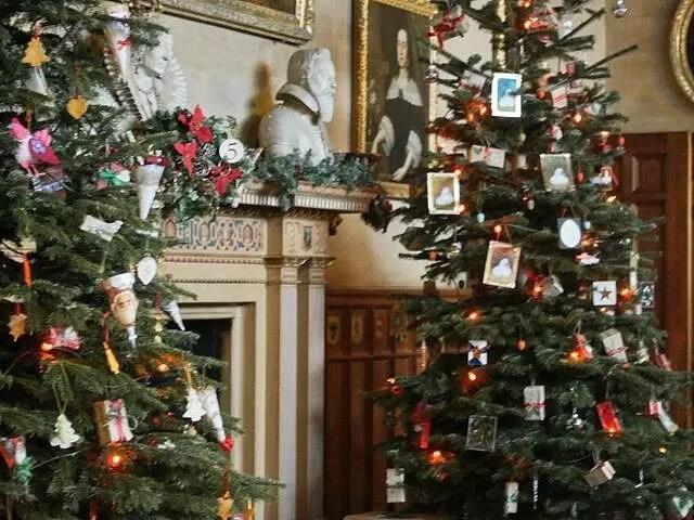 Charlecote park christmas trees