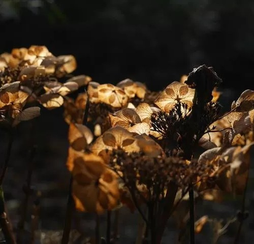 contrajour light through decaying flowers