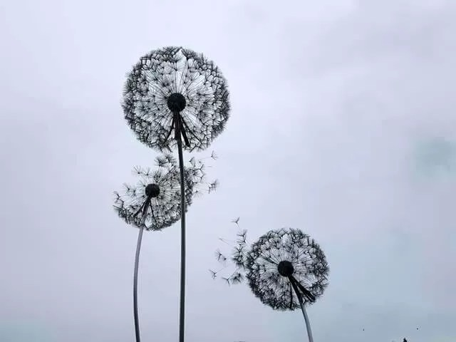 dandelion sculptures