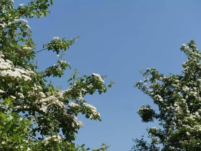 blossoms at stanwick lakes