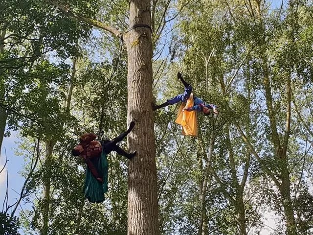 aerial display up a tree