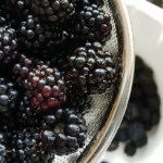 Project 52 2018 week 37 – Blackberry season