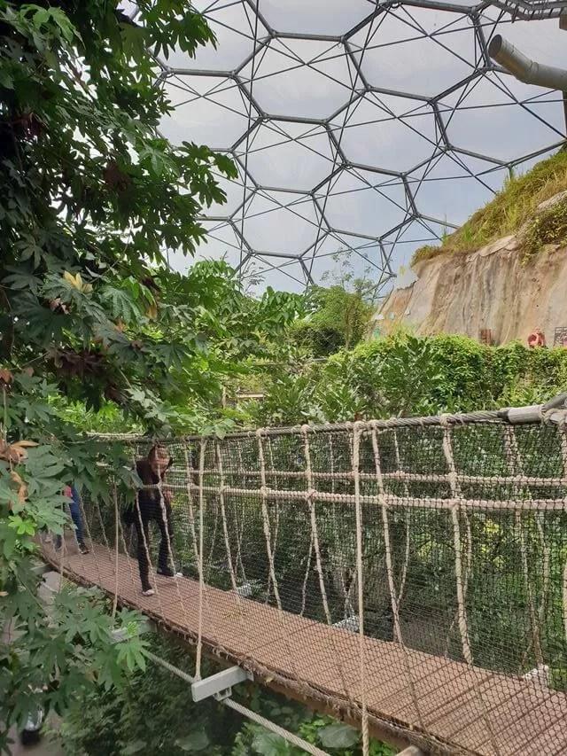 rope bridge in biome