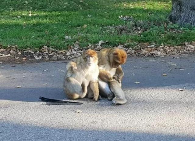 itching monkeys