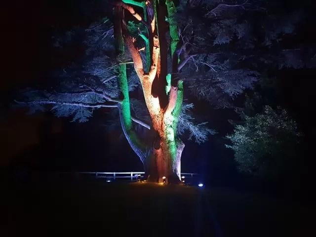 lit up tree trunk