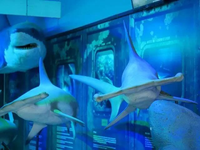 display of shark models