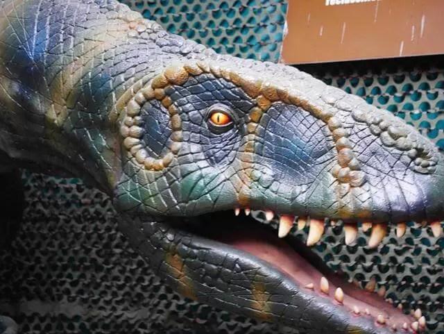 model dinosaur head and teeth
