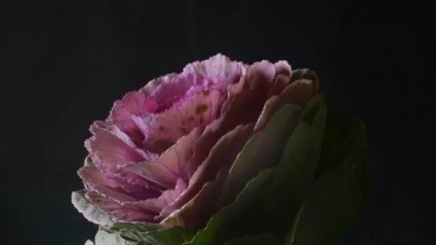 Flower photography challenge prompts - Bubbablue and me