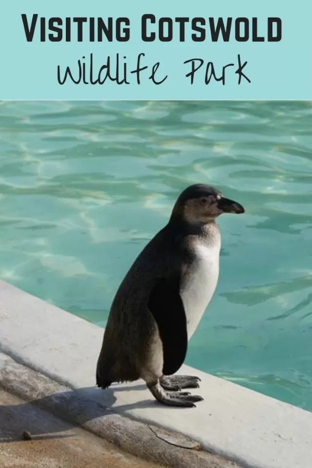 cotswold wildlife park visit - Bubbablue and me
