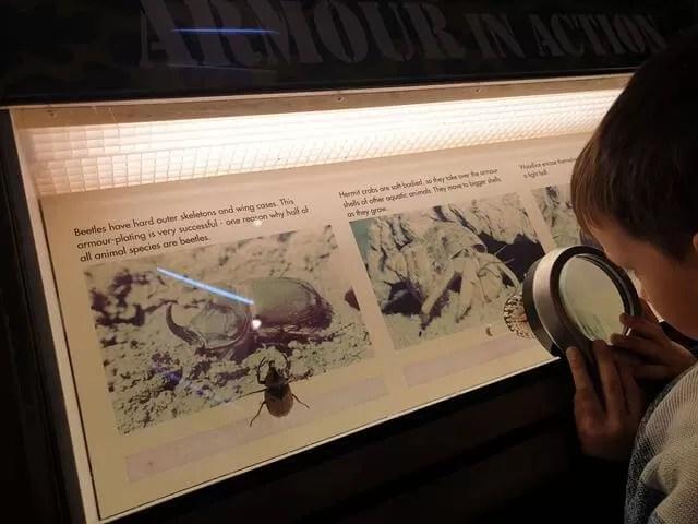 examining exhibits