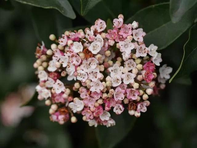 pink mini flowers