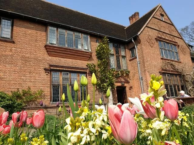 tulips in front of goddards house