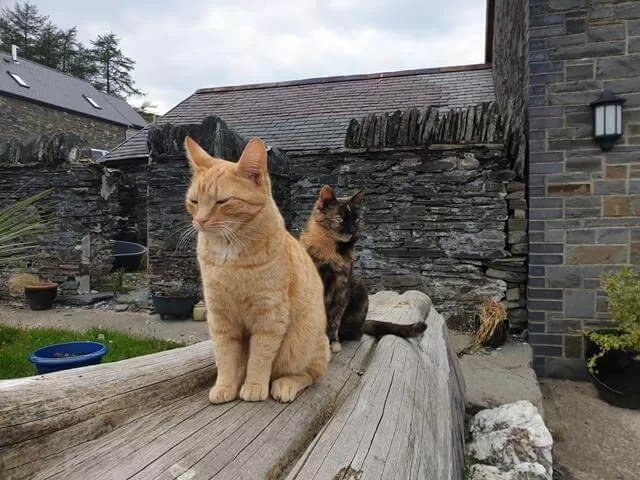 farmhouse cats