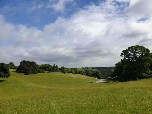 green meadows at basildon park