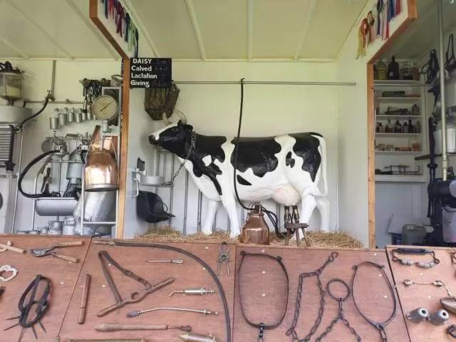 model of dairy milking