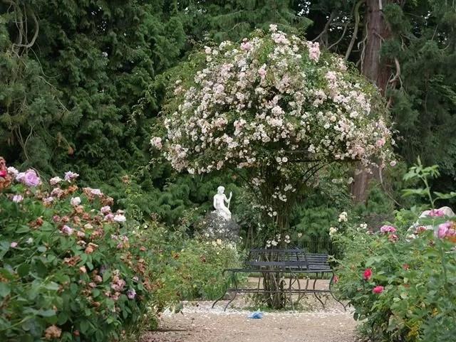 rose garden tree