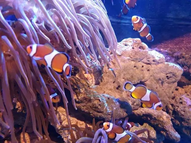 clownfish in blackpool