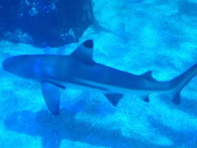 shark swim by