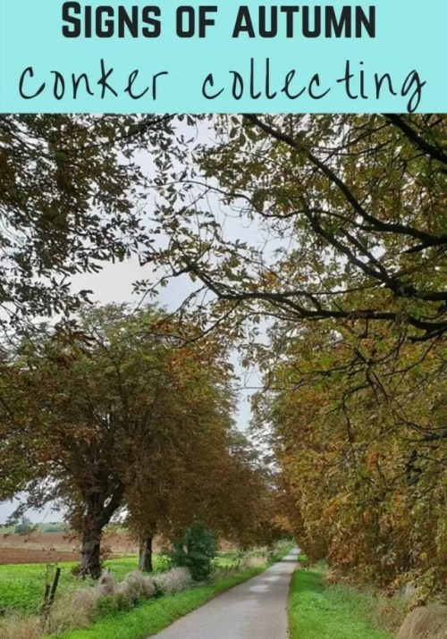 Collecting conkers and signs of autumn - Bubbablue and me