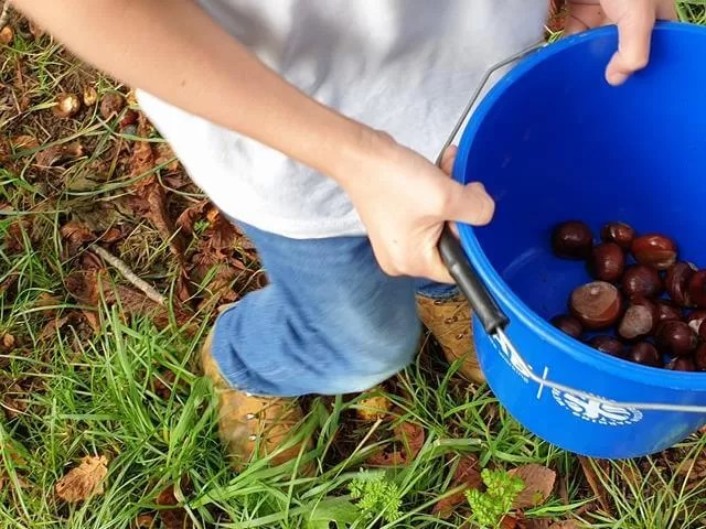 conker haul in a blue bucket