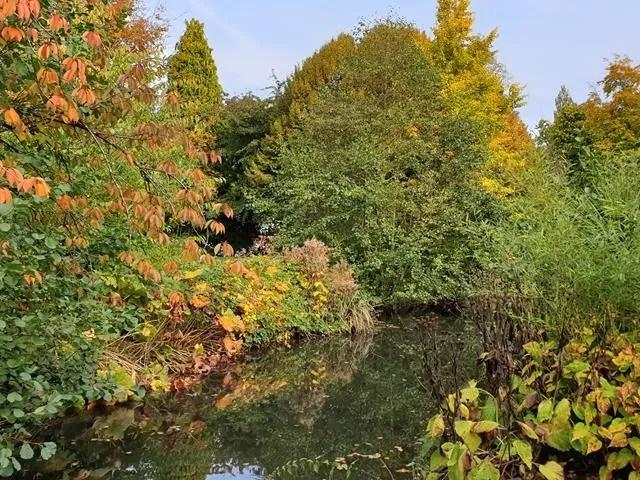 autumn colours next to the lake