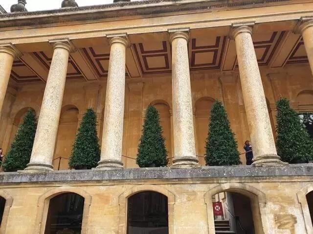 row of christmas trees inbetween building columns