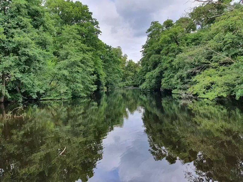trees and sky reflection in water