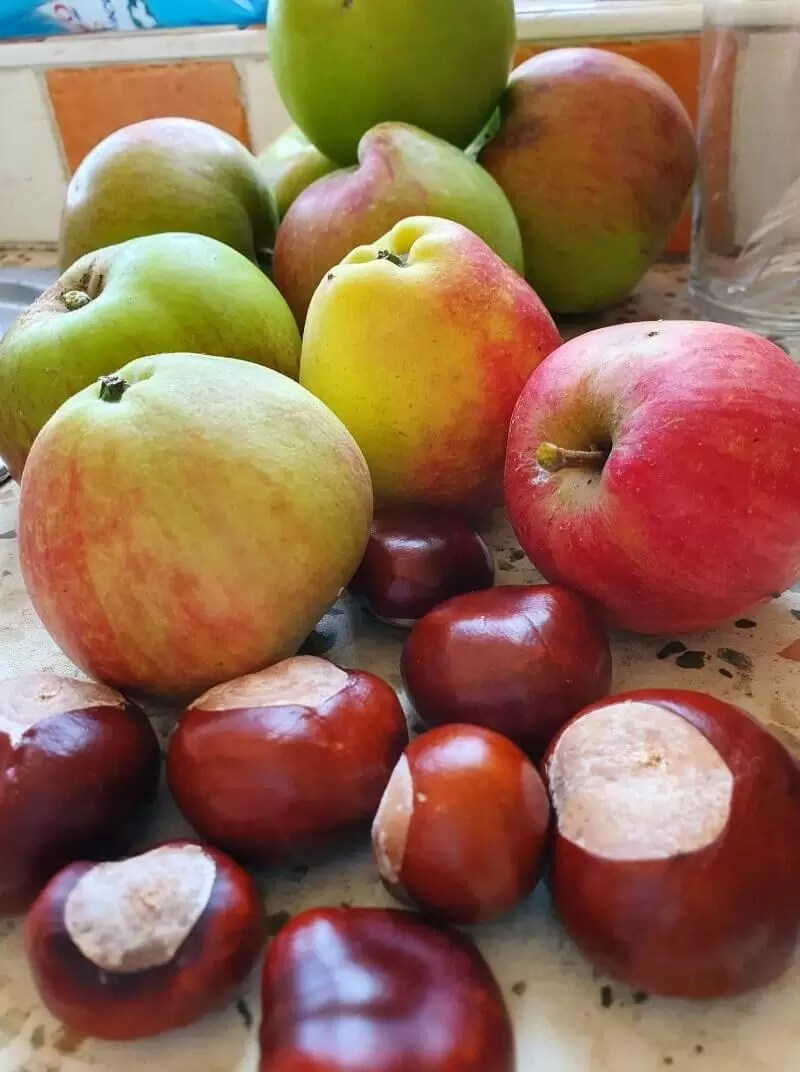 autumn harvest of cooking and dessert apples plus conkers