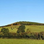Project 52 2020 week 39 – cows on the hill