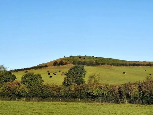cow on a hill and field in he distance under blue sky
