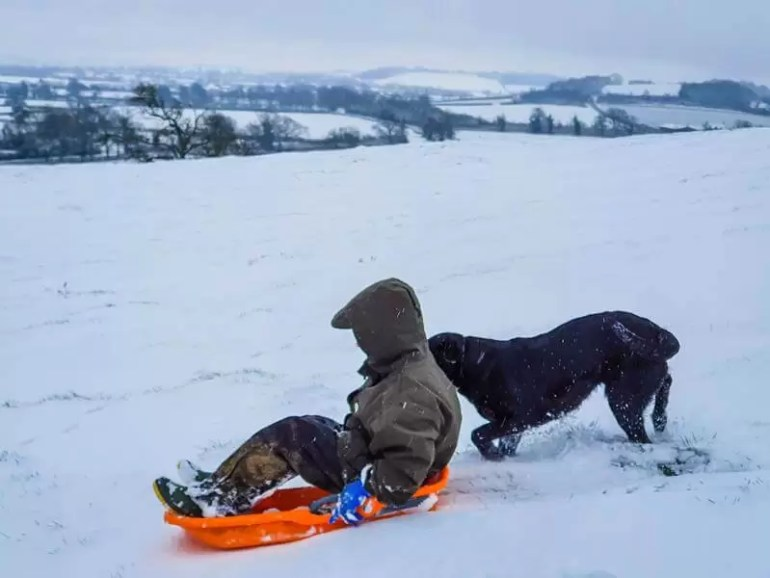 boy in big coat and hood on orange sledge with black labrador dog biehind looking like it's pushing the boy