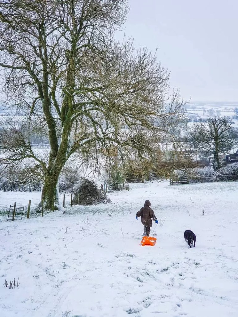 looking down a snowy hill at boy with orange sledge and dog in the distance, trees on left