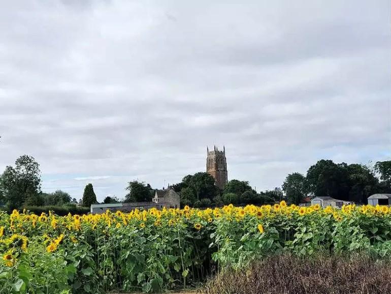 church view over sunflower field