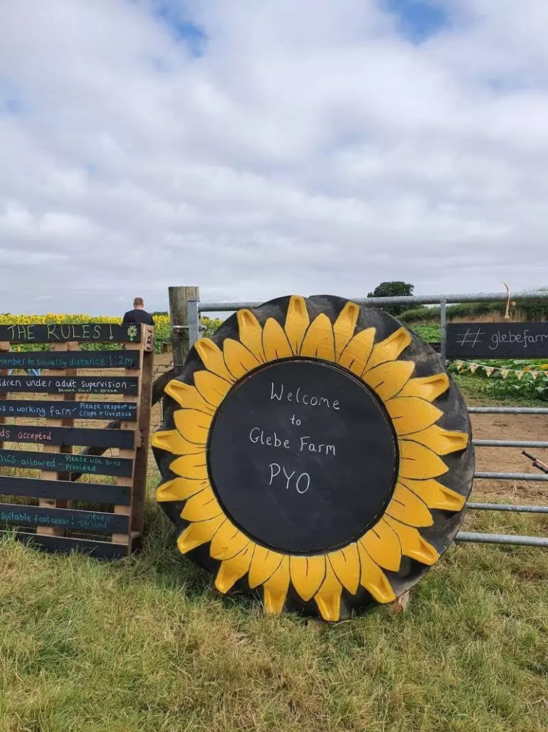 glebe farm sunflower field entrance