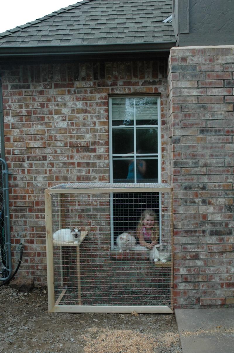window cat house online