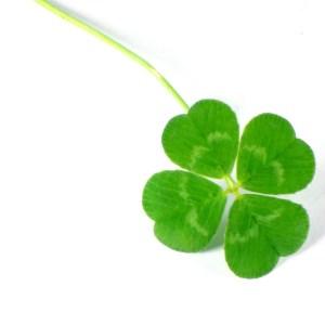 trèfle vert a quatre feuilles