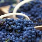Rode wijn is goed voor je lever.