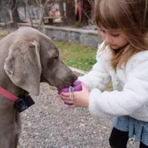 silicone dog bowl, dog bowl, bubi bowl, pet bowl, dog and kids