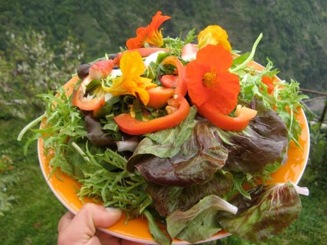 Moje sniadanie - pomidory, salata, nasturcje, papryka, kilka ziol, awokado