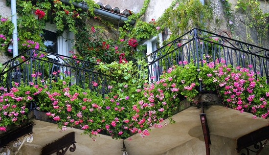 Ogrodek Czarownicy w miescie na balkonie - Magiczny blog wrozki Marii Bucardi