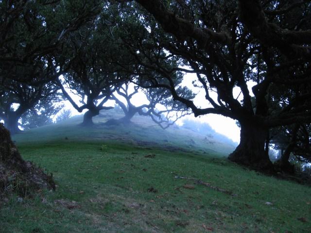 Magiczny Las Elfow i Istot Natury - blog Marii Bucardi
