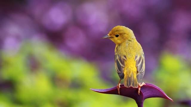 medytacja z Maria Bucardi dla ptasich przyjaciol