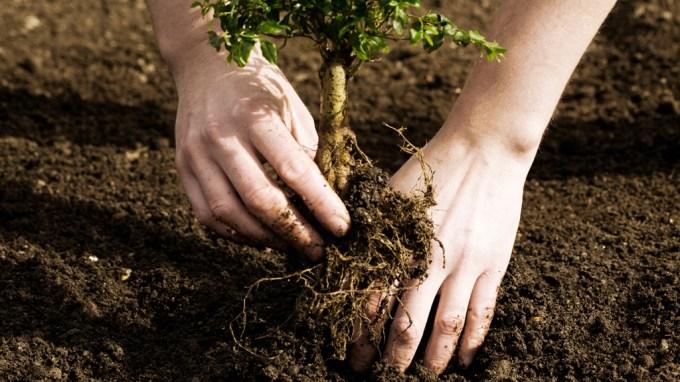 posadz_drzewo_w_oazie