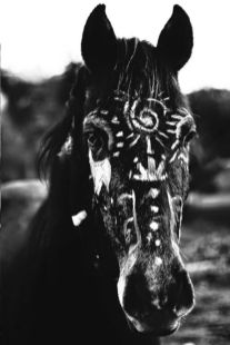 kon_zwierze_mocy_bucardi