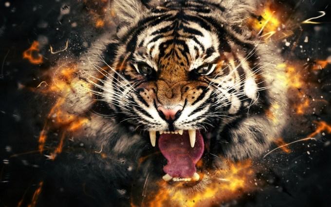 tygrys_zwierze_mocy_bucardi.jpg