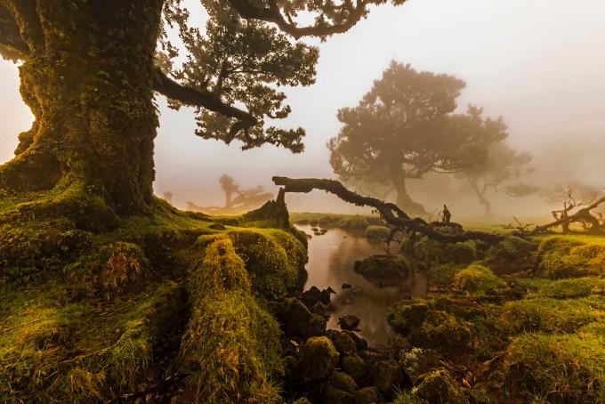 O_Fanal,_Ilha_da_Madeira,_Portugal.jpg